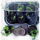 Zombie Plant Grow Kit
