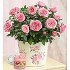 Large Classic Budding Rose Plant with Yankee Candle