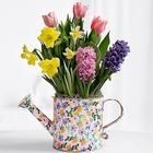 Spring Watering Can Bulb Garden