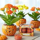 Festive Fall Pumpkin Trio of Mini Ceramic Pots and Flowers