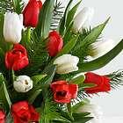 Christmas Tulip and Fresh Douglas Fir Bouquet