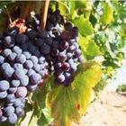 Willamette Valley Wine Tour Experience for 1