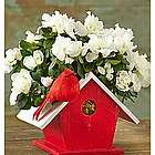 Birdhouse of Blooms Azalea Plant