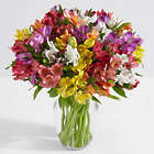 100 Blooms of Peruvian Lilies with Large Glass Ginger Vase