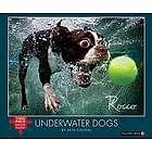 Underwater Dogs Puzzle
