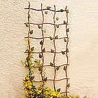 Ivy Garden Trellis