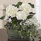 Tranquil White Flowers Dish Garden