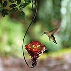 Mini-Blossom Gloria Hummingbird Feeder with Hanging Hook