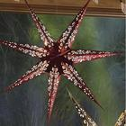 LED Paper Star Lantern in Christmas Colors