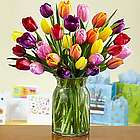 30 Multi-Colored Birthday Tulips