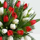 30 Christmas Tulips with Fresh Douglas Fir Floral Bouquet
