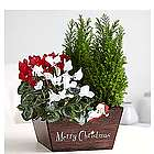 Holiday Sleigh Planter