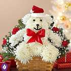 Very Merry Beary in Santa Hat Carnation Bouquet