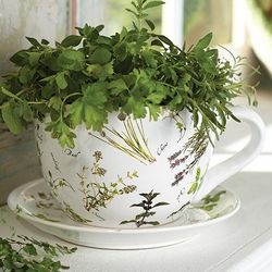 Cup and Saucer Herbs Pot