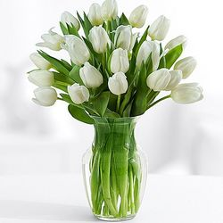 20 White Tulips Bouquet