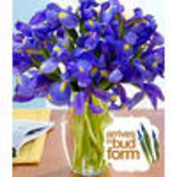 20 Blue Iris Bouquet