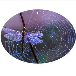 "9"" Dragonfly Oval Sun Catcher"