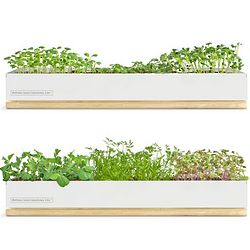 Micro Green Spice or Vegetable Growing Kit