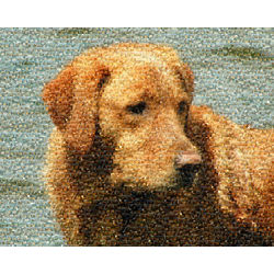 Pet Photo Mosaic 16x20 Framed Print