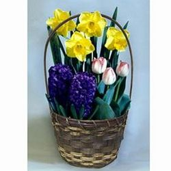 Flowering Bulb Garden Gift Basket