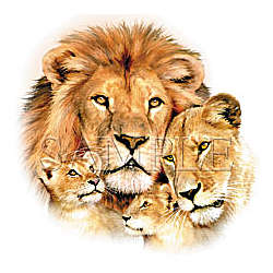 Lion Faces T-Shirt