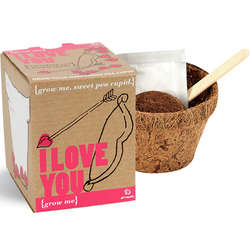 I Love You Plant Kit