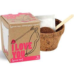 I Love You Plant Kit