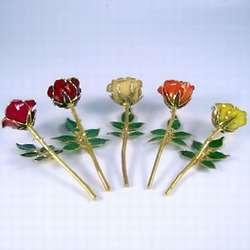 Promise Gold-Trimmed Rose