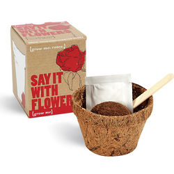 Say it With Flowers Rose Plant Kit