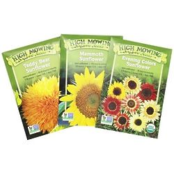 Summer of Sunflowers Collection of Seeds