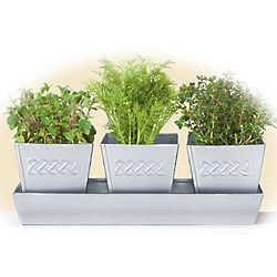 Celtic Herb Planters Set