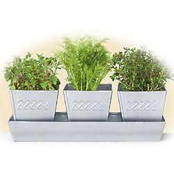 Celtic Herb Planters Set