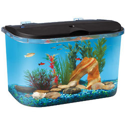 Aquarius Panaview 5 Gallon Aquarium Kit