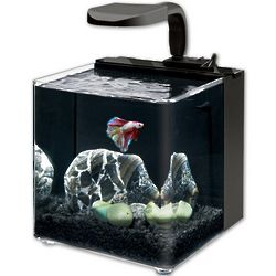 Aqueon Evolve LED 2 Gallon Aquarium Kit
