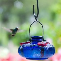 Blue Bloom Calliope Hummingbird Feeder