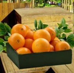 Citrus Fest Orange and Grapefruit Lovers Gift Box
