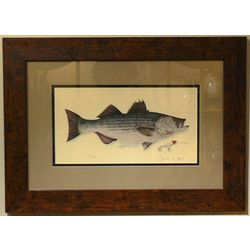 Striper Bass Print with Distressed Pine Frame