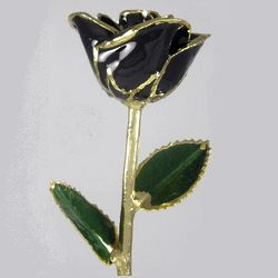 "Over the Hill 11"" Gold Edged Black Rose"