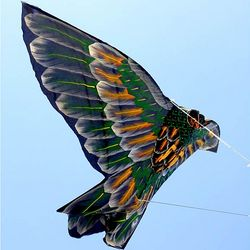 Forest Owl Kite