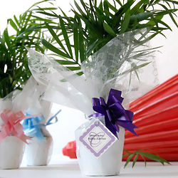 Mini Palm Plant Wedding Favors