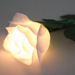 White Light-Up Roses