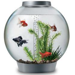 8 Gallon Silver Aquarium Starter Kit