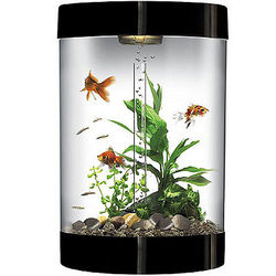 9 Gallon Black Aquarium Starter Kit