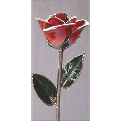Red Two-Toned and Platinum-Tipped Rose