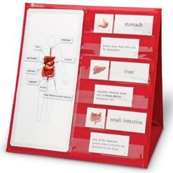 Human Body Magnetic Tabletop Learning Center
