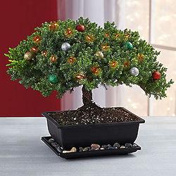 Merry Christmas Bonsai Tree