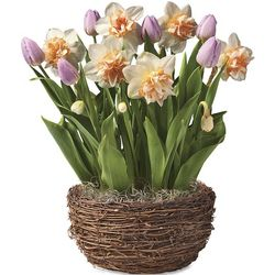 Tulip and Narcissus Bulb Garden Basket