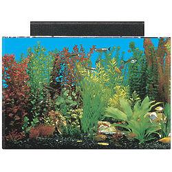 Rectangular 20 Gallon Acrylic Aquarium