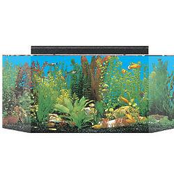 Flatback Hexagon Acrylic Aquarium