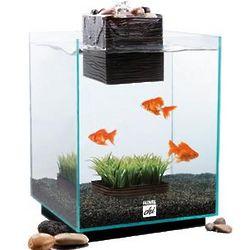 Positive Chi Aquarium
